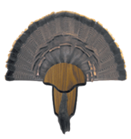 HS Turkey Tail & Beard Mount Kit