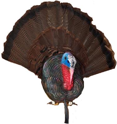 Cherokee Turkey Taxidermy Bust Plaque